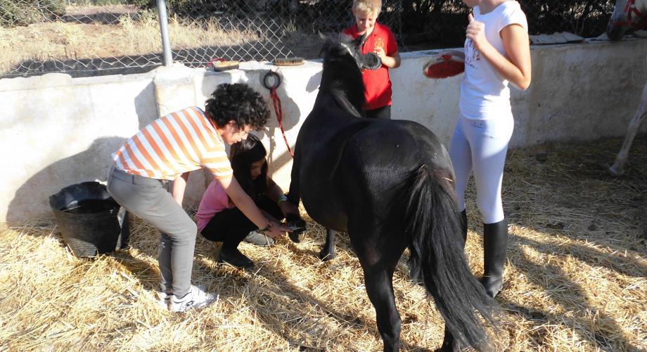 English Horse Camp II, grooming - Cortijo Las Minas
