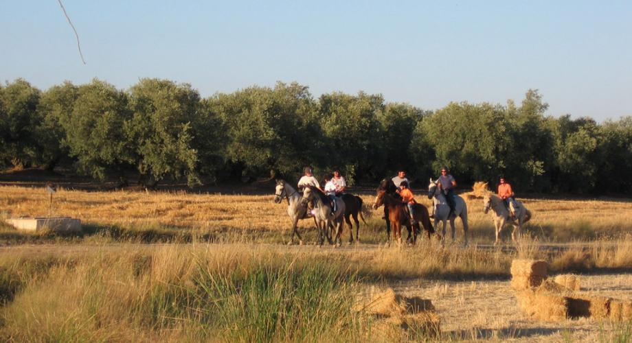 Rutas a Caballo Grupos- Cortijo Las Minas