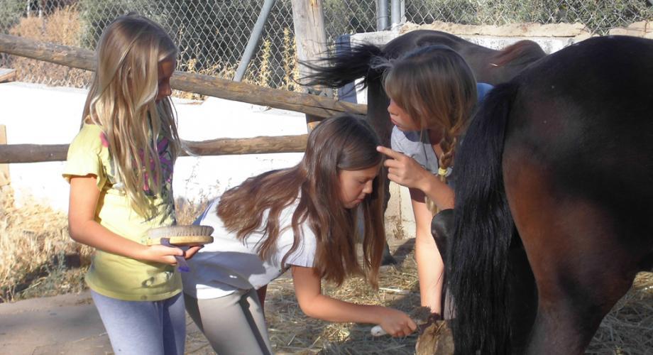 Aprendiendo cuidados del caballo - Cortijo Las Minas